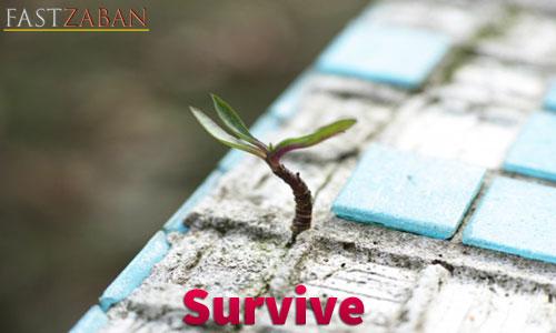 آموزش لغات کتاب ۵۰۴ واژه تصویری - واژه Survive