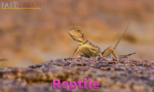 آموزش لغات کتاب ۵۰۴ واژه تصویری - لغت Reptile