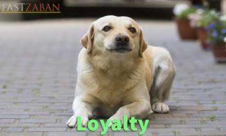 آموزش لغات کتاب ۵۰۴ واژه تصویری - لغت Loyalty