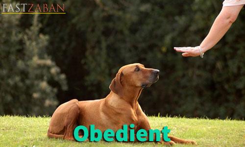 آموزش تصویری لغات ۵۰۴ واژه - لغت obedient